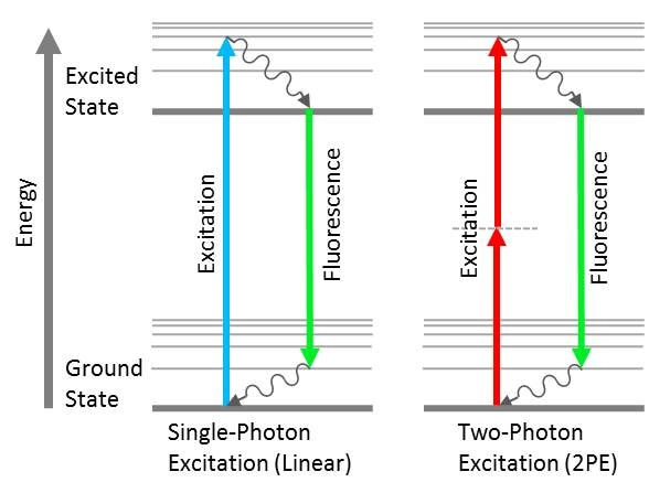 Jablonski diagrams showing linear vs. non-linear fluorescence. In linear single-photon excitation, the absorption of short wavelength photons results in a longer wavelength fluorescence emission. In non-linear two-photon excitation (2PE), the absorption of two long wavelength photons results in a shorter wavelength fluorescence emission.