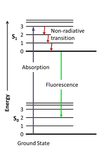 What Is The Difference Between Fluorescence And Phosphorescence