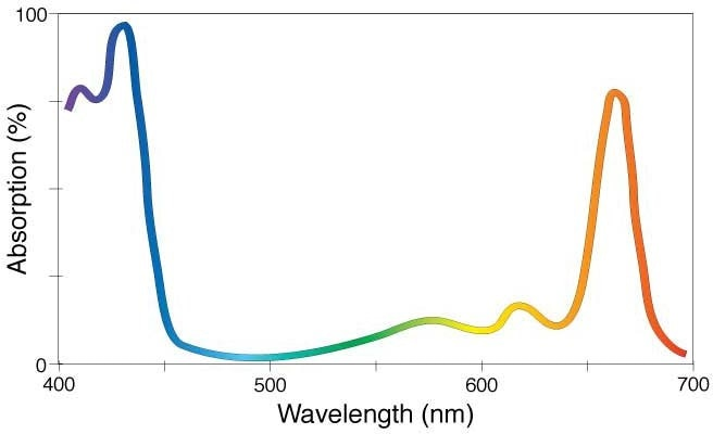 The absorption spectrum of the chemical compound chlorophyll a (C55H72MgN4O5). Because it absorbs primarily the violet/blue and orange/red wavelengths, chlorophyll a—the substance that is essential to photosynthesis in plants—appears green to our eyes, giving plants their green hue. (Image Source: NASA)