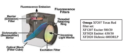 Filters for Fluorescence In Situ Hybridization (FISH) Imaging