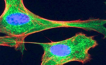 Using Lasers in Biophotonics Life Sciences Research