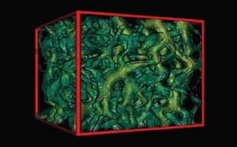 X-Ray Computed Microtomography Providing Nondestructive High-Resolution 3D Imaging by Princeton Instruments