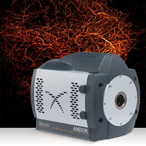 Andor Launches iXon Life for Fluorescence Microscopy – EMCCD Performance at sCMOS Price
