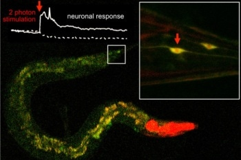 Scientists Use Pulsed Infrared Light Lasers to Activate Molecules Located Inside Neural Tissue